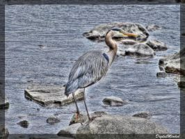 Grand heron gris by digitalminded