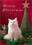 Christmas cat 2011 by warriorbern