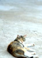 Resting cat by Kelleyhound