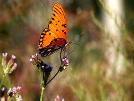 Large Orange Butterfly by Sharondipity