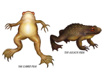 The Clawed Frog and The Goliath Frog by V-L-A-D-I-M-I-R