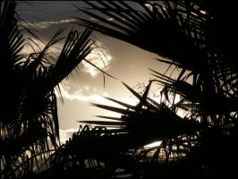 Palm Silhouette by LookingGlassArt