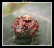 Wooly Jumper by Insect-Lovers-Club