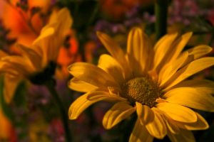 Floral Vibrancy by S-H-Photography