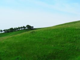 Trees on the hill by attilapele