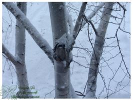 2010 5-6 02 Snow Pictures 01 by lilly-peacecraft