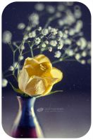 Yellow rose by ChudnayaMamba