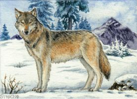 Wolf ACEO by Strecno