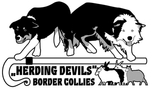 Herding Devils Border Collies by Arahiriel