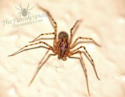 Adult Spitting Spider - Full Body by TheFunnySpider