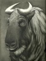 Miskin Takin - Charcoal by ExecutionStyle