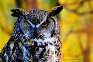 Great Horned Owl by 8TwilightAngel8