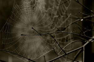 Web morning by PoppyHunter