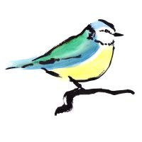 Blue Tit number 4 by TomHenderson