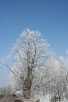 Frosted Tree by entropy462