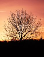 Tree in the Sunset by Dark-Angel15-2010