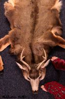 Deer Skin Rug by NaturePunk