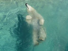Polar Bear 01 by Unseelie-Stock