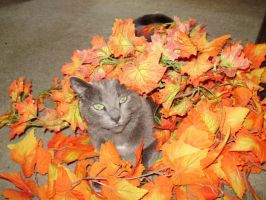 It's Fall by Mew-tew