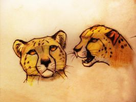 two   cheetah by Dream-oN93