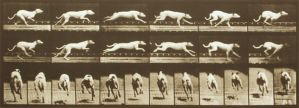 Greyhound back and side view by animation-stock