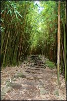 Bamboo Forest by gmandavid