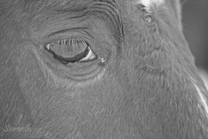 Equine Expressions - Ronin II by sioranth