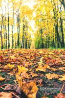 The Leaves on the Ground by DDKonstantinov