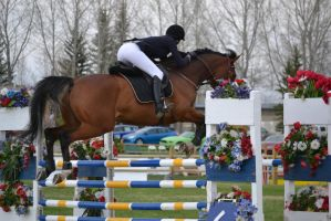 Show Jumping - 7 by Silver-Stock-Images
