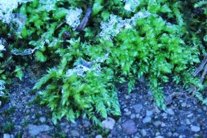 Icy Green by wuestenbrand