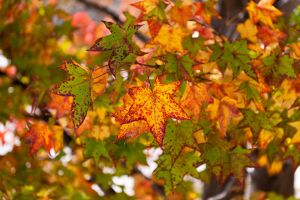 Winter Leaves at the Getty by trevor-w