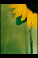 Sunflower 4 by Justynka