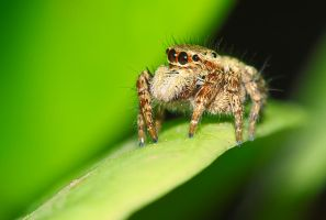 little spider by CSamiano
