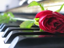 The Combination of Music and Rose by TinSatriawan
