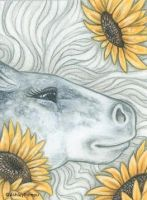 ACEO - Horse Flowers - Sunflowers by vashley