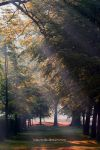 Magical Morning ll by MTO70