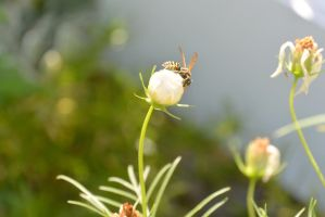 Little Wasp On Bud by Miss-Tbones