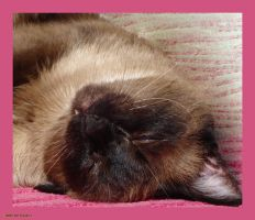 Sweet Dreams Canan by Tigles1Artistry