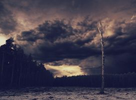 Lonesome tree by Mortsnort