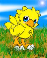 CHOCOBO by BabyChrisFox