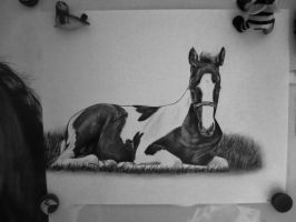 Horse drawing in black and white 3 by Nienke15
