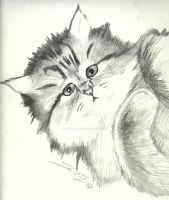 Kitty in pencil by agenttomcat