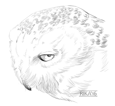 Sketchtember #14 - Snow Owl by RikaTieck