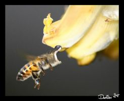 hippo bee++++++++++ by Damian6347177