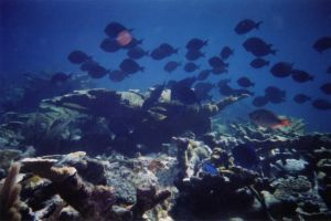fishys by dlc-nature-stock