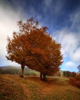Autumn by mutos