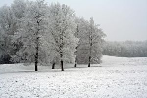 winterland 20 by priesteres-stock