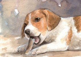 Rawhide Chew ACEO by Pannya