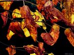 AUTUMN COLORS by mecengineer