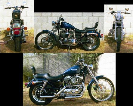2000 Sportster Custom by acurmudgeon